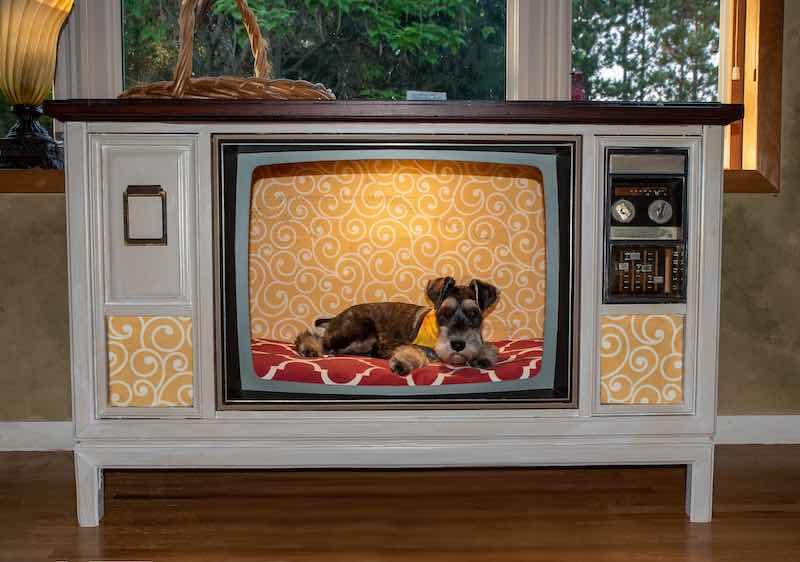 Dog sitting in an repurposed tv set.  Benefits of repurposing items.